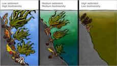 Underwater sediment build-up