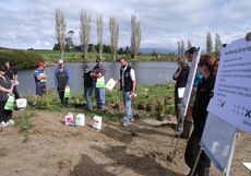 Riverbank planting