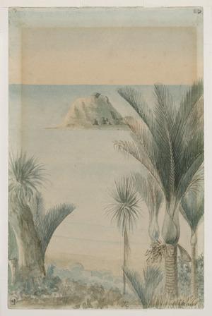 [Doubleday, William or John], fl 1880s :Waiwera Nikau [1885]