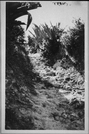 Path to the beach on Crete - Photograph taken by R C Gibson
