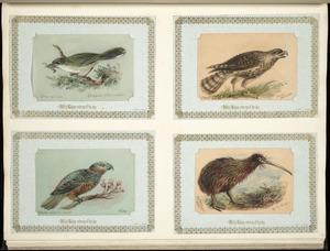 Archibald Dudingston Willis (Firm) :Grey warbler / Gerygone flaviventris. Circus Gouldi / Gould's harrier. Nestor meridionalis / Kaka. Apteryx Mantelli / N.I. kiwi. [ca 1885]