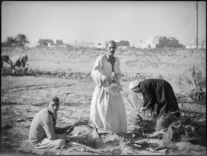 Local men cutting date palm shoots, Egypt - Photograph taken by George Kaye