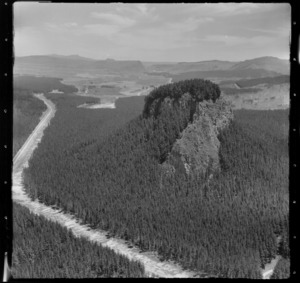 Pine forest near Atiamuri Hydro-electric power station, Waikato River