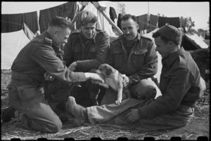 Canine mascot Spandau at the NZ LOB Camp near Capua, Italy, World War II - Photograph taken by George Bull