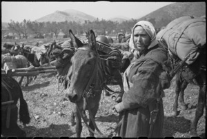 French Moroccan mules solve supply problem on mountanous Italian Front, World War II - Photograph taken by George Kaye