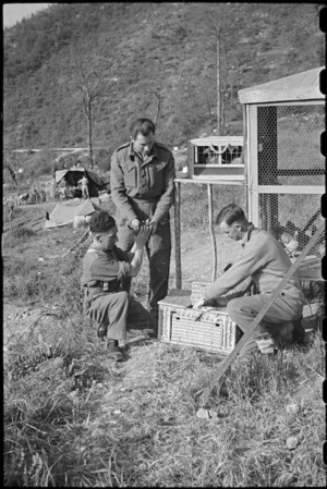 British personnel load carrier pigeons into crate for practice flight, Casale, Italy, World War II - Photograph taken by George Bull