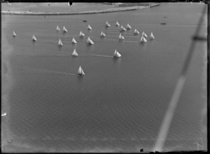 View of a yacht race on Auckland Harbour