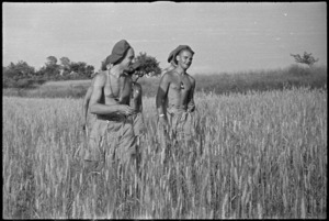 M A Kemp and T M Rowat in a wheatfield near Sora, Italy, World War II - Photograph taken by George Kaye