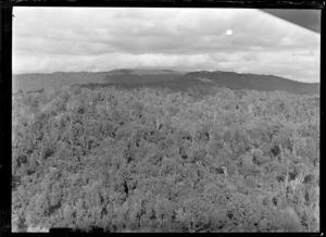 View of Rotorua native bush, Bay of Plenty Region