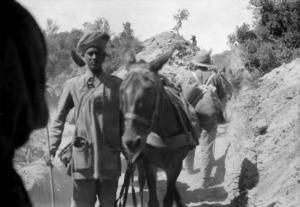 Indian man with mule, Gallipoli, Turkey
