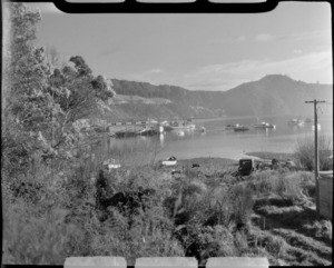 Picton harbour, Marlborough District, including boats, boat shed and bush area