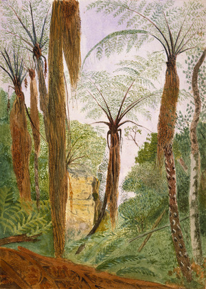 Hands, Alfred Watson, 1849-1927 :[Grove of pungas, 1887?]