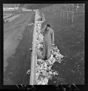 Mr Vince Meates, custodian, cleaning rubbish from grounds after second test match, at Athletic Park, Berhampore, Wellington