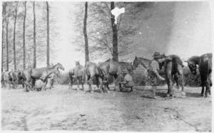 Horse lines at Dickebusch, Belgium