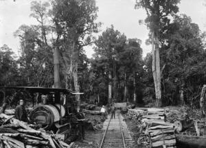 Bush scene at Erua, with timber, bush railway lines, and steam log hauler