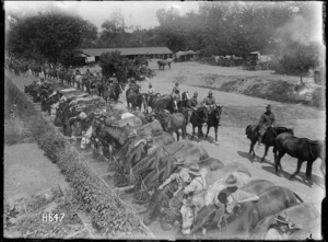 New Zealand horses and troops at a watering point in Louvencourt, France, during World War I