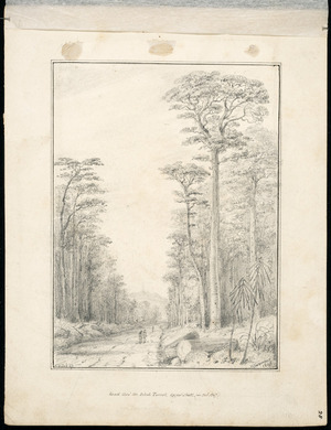 Swainson, William, 1789-1855 :Road thro' the Birch Forest, Upper Hutt (in Oct 1847. 28 Oct '47 / W Swainson, 1848.