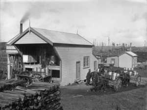 Men loading horse-drawn carts with milk cans ready for transport to a factory in the Taranaki district