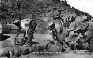 Indian troops unloading Mules, Gallipoli, Turkey