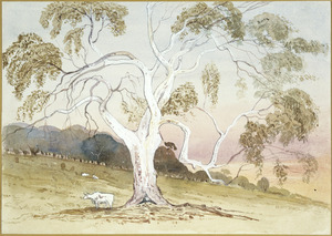 [Fox, William] 1812-1893 :Gum tree at Pewsey Vale S[outh] Australia [1865?]