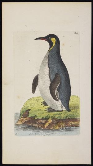 Nodder, Richard Polydore, fl 1786-1820 :[Emperor penguin]. London. Published Dec 1st, 1799 by F P Nodder, Newman Street. [Plate] 409
