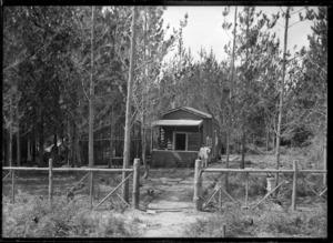 Hut amongst pine trees