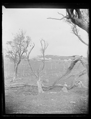 Scene with branches and houses, Chatham Islands