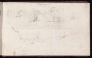 Mantell, Walter Baldock Durrant, 1820-1895 :Blueskin. Oct 11. [1848]; [Miscellaneous sketches, duck, tree trunk coast around Timaru. 1848]