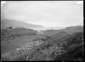 Scene including Te Akau station shearing shed, and Woody Head (also known as Karioi), near Raglan - Photograph taken by Gilmour Brothers