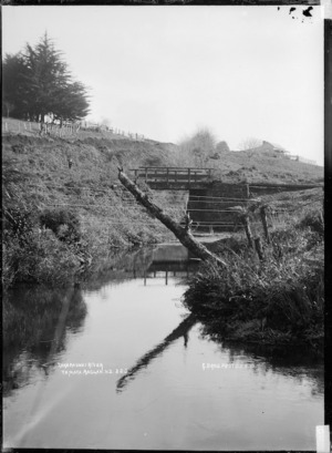 Takapaunui River, Raglan County, 1910 - Photograph taken by Gilmour Brothers