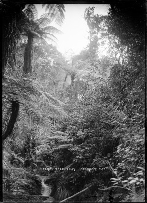 Fern Tree Gully, Northcote, Auckland