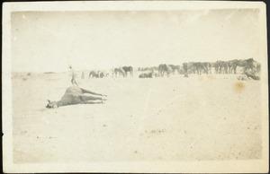 Horses in the desert at Beersheba (Bir Saba), Palestine