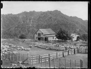 Shearing shed and yards at Mangatoi Station