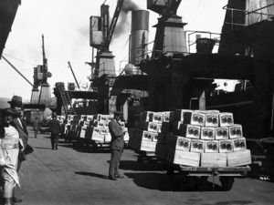 Loading apples for export
