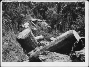 Logs in a bush lined gully