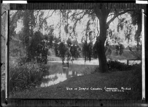 Domain grounds, Cambridge, 1916 - Photograph taken by Edward John Wilkinson