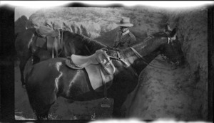 Soldier of the ANZAC Mounted Division standing with two horses