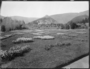 Looking over a field of daffodils, towards Otahuna homestead, Taitapu, Canterbury