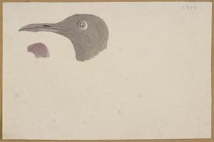 Ellis, William Wade, d 1785 :[Bird's head. 1779]