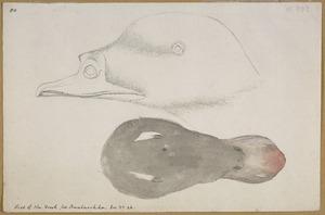 Ellis, William Wade, d 1785 :Head of the duck from Unalaschka [1779]
