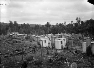 Huts at an Ellis & Burnand bush camp in Ongarue