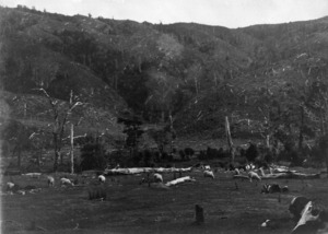 Cleared land, Wainuiomata