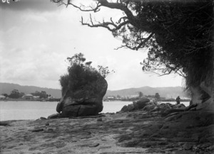 View of Whitianga beach front at low tide