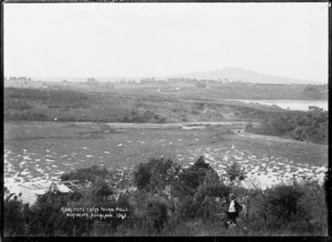 Onepoto Lagoon from Thorn Hills, Northcote, Auckland