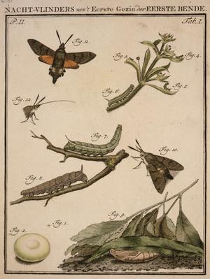 [Schellenberg, Johann Rudoph] 1740-1806. Attributed works :Nacht-vlinders van't eerste gezin der eerste bende. Tab. I. [Amsterdam?, 1790s?]