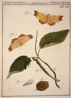 [Schellenberg, Johann Rudoph] 1740-1806. Attributed works :Nacht-vlinders van't tweede gezin der tweede bende. Tab. VIII. [Amsterdam?, 1790s?]
