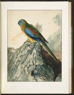 A natural history of the birds of New South Wales : collected, engraved and faithfully painted after nature / by John William Lewin.