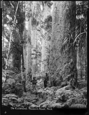 The Cathedral, a group of kauri trees in Trounson Kauri Park, Kaipara district, Northland