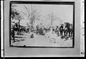World War I horse lines in the Middle East