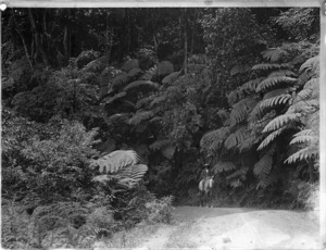 Horse and rider posing on road surrounded by bush